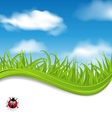 summer beautiful card nature background vector image