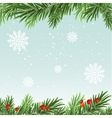 Spruce branches background Christmas background vector image
