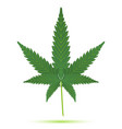 cannabis leaf isolated vector image