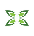 green leaf butterfly logo vector image vector image