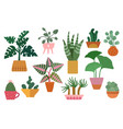 house plant home cactus scandinavian decor cute vector image