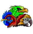 parrot eagle and rooster head vector image