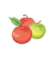 red and green apple fruits hand drawn vector image