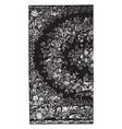 rug is designed with flower buds vintage engraving vector image vector image