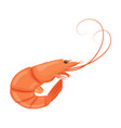 boiled shrimp cooked tiger prawn shrimp isolated vector image vector image