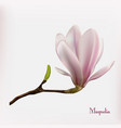magnolia flower background vector image