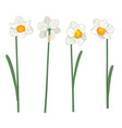narcisus set collection hand drawn botanical vector image