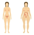 The woman before and during pregnancy vector image vector image