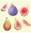 Watercolor hand drawn figs vector image