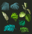 botanical leaf set vector image vector image