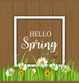 hello spring greeting card with blooming chamomile vector image