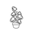 potted monstera palm plants line style icon vector image vector image