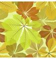 Chestnut leaves vector image