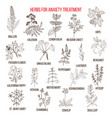collection of herbs for anxiety treatment vector image vector image