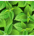 Nettle seamless pattern vector image vector image