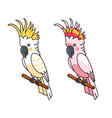 yellow and pink cockatoos vector image