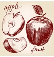 apple fruit set hand drawn llustration vector image vector image