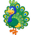 beautiful chicken peacock on white background vector image vector image
