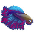 cartoon blue betta fish siamese fighting fish vector image vector image