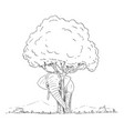 cartoon last elephant hiding behind last vector image