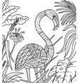 flamingo in summer time coloring book vector image