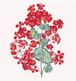 beautiful red geranium flower vector image