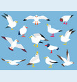 cartoon atlantic seabird vector image vector image