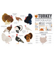 poultry farming infographic template turkey vector image vector image