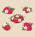 raspberry with leaves and flowers vector image