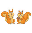 set squirrels vector image