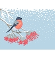 winter snowy card with bullfinch on branch of vector image vector image