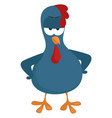 angry blue chicken on white background vector image vector image