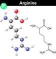 Arginine proteinogenic amino acid vector image vector image