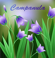 Beautiful Flower of Campanula Rotundifolia Flower vector image