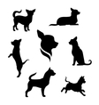 Chihuahua dog silhouettes vector image vector image
