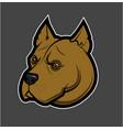 pitbull head image vector image