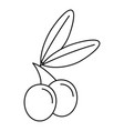 jewish olive icon outline style vector image