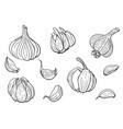 linear set garlic vector image vector image
