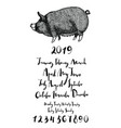 piggy months of year 2019 days of the week numbers vector image
