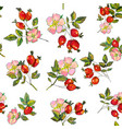 rosehip berries and flowers seamless pattern vector image vector image