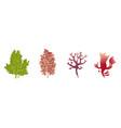 underwater flora seaweed aquarium algae vector image vector image