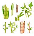 bamboo realistic set vector image