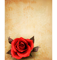Big red rose on old paper background