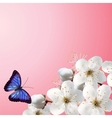 Cherry Blossoms On A Pink Background vector image vector image
