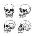 human skull hand drawn skulls sketch vintage vector image vector image