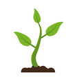 plant with leaves icon image vector image vector image