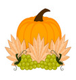 pumpkin and grapes thanksgiving concept image vector image vector image