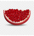 slice of pomegranate icon realistic style vector image