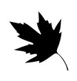 sycamore leaf vector image vector image