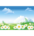 chamomile on blue sky vector image